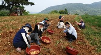 정다운 농장 일손돕기
